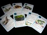 jeu de carte - famille amphibien