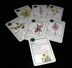 jeu de carte - famille plante