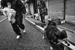 """Mikiko e Yoshida mentre cercano di catturare un cane abbandonato, Odaka City,  Fukushima """"No-Go Zone"""", Giappone"""
