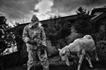 "Yamashita mentre cattura una capra abbandonata, Fukushima ""No-Go Zone"", Giappone"