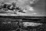 """Campi di riso contaminati, Minamisoma, Fukushima """"No-Go Zone"""", Giappone"""