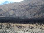 Das Ausmass des Waldbrandes im Nationalpark Torres del Paine ist erschreckend