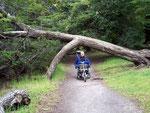 Einen Teil der Wege im Nationalpark Tierra del Fuego konnten wir mit dem Rollstuhl machen