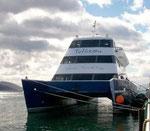 Von Ushuaia mit dem Katamaran in zweieinhalbstündiger Fahrt zu Seelöwen, Kormoranen