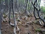 Der Aufstieg zum Cerro Guenaco im Nationalpark Tierra del Fuego führt die ersten 600 Höhenmeter gut markiert durch Wald