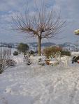féérique sous la neige