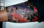 金魚 紅葉 裏腿