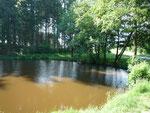 L'étang avec les sapins jusque 2020