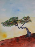 knorriger Baum, Airbrush auf Aquarellpapier, 56x76 cm ungerahmt 200 Euro, in silbernem Rahmen 74x100 cm 230 Euro