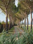 eine Allee in der Maremma im Süden der Toskana, das war unsere Urlaubsverlängerung