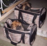 ... beide bleiben brav in ihrer Tasche