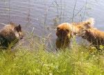 Abkühlung im Teich - Tante Ylvi, Großtante Shiwa u. Ronja
