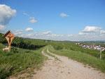 einer der vielen Spazierwege Geisenheim-Rüdesheim durch die Weinberge /one of the many walks