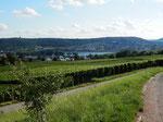 einer der vielen Spazierwege Geisenheim-Rüdesheim durch die Weinberge/one of the many walks