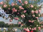 Blick auf den Rhein in Eltville/rhine view in Eltville