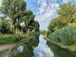 Seitenarm des Rheins in Geisenheim
