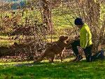 Rocky mit Luca beim Crossdogging