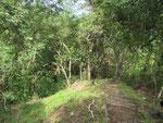 der Weg zum Aussichtspavillon