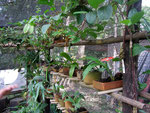 Die Orchideenzuchtecke im Mariposario.