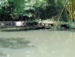 Der Angelteich mit dem Amazonaskanu.
