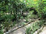Der Pflanzengarten mit Beschilderung
