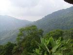 Nebelwald in 2600 Meter Höhe