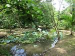 Der Bereich Wasserpflanzen