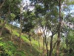 die Umgebung der Eco Habs