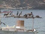 ...den Ruheplatz auf einem ausgemusterten Fischerboot im Hafen von Taganga.