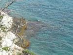 Die Natur in der Bucht von Taganga