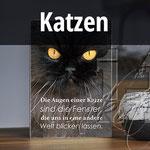 Holzbilder mit Katzen, Hundebilder, Katzenspruch, Katzenfreunde