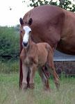 Pearly Spencer von Tecumseh, eine Woche alt