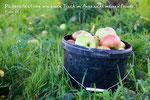 Äpfel, Vörstetten