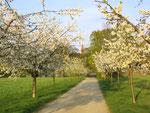 Im Mai mit der Baumblüte