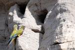 Papageien die ihre Hoehlen in Steilwaende gebaut haben... 1000sende von ihrer Art schwirren da rum...