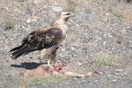 Vogel beim Essen