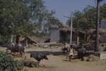 Indischer Bauer