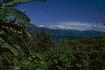 Kaffeeplantage an einen Hang vom Lago de Atitlan