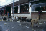 Straßenhunde nach einen Markt beim Abendessen