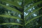 Peten der Dschungel Guatemalas