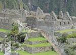 Wohnviertel im Machu Picchu