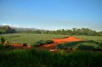 Auf dem Weg zur Pazifikküste durchfuhren wir viele Plantagen von Ananas, Zuckerrohr und anderen Feldfrüchten. Gut zu erkennen die Fruchtbare rote erde.
