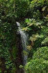 Zeigt von dem Wasserreichtum im Regenwald, überall ergießen sich Wasserfälle von oben.