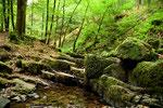 Kleine Bachlauf im Wald
