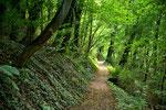 Auf einem schönen Waldweg
