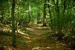 Durch einen schattigen Wald geht es los