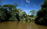 """Am nächsten Tag fuhren wir in den Norden an die Grenze zu Nicaragua, dort liegt der Naturpark """" Cano Negro"""" einer einzigartigen Flußlandschaft und einer reichen Tierwelt."""