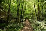 Im Wald des Steinbachtales