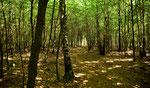 Im lichten Laubwald