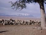 Illimani - der Hausberg von La Paz und El Alto